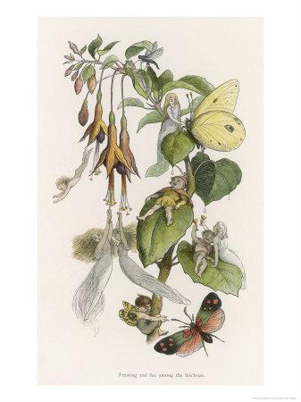 Feasting and Fun Among the Fuchsias, Fairies and Elves are Visited by Butterflies