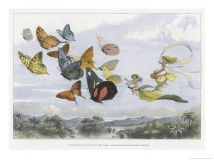 The Fairy Queen Takes an Airy Drive in a Light Carriage by Richard Doyle