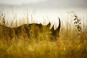 Black Rhino; South Africa by Richard Du Toit