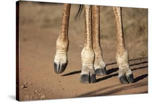 Giraffe Feet, South Africa by Richard Du Toit