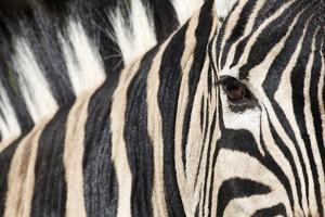 Zebra Eye, South Africa by Richard Du Toit