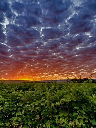 Abeja Winery at Dawn, Walla Walla, Washington, USA by Richard Duval
