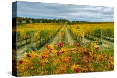 Autumn in Leonetti Vineyard, Walla Walla, Washington, USA