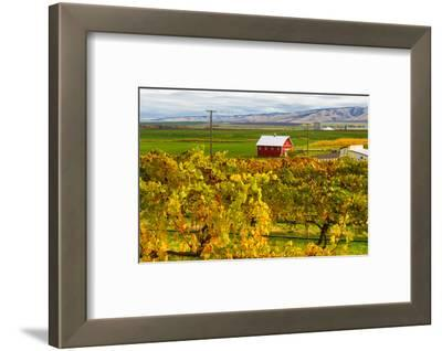 Autumn in Walla Walla Wine Country, Walla Walla, Washington, USA