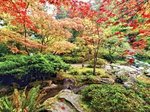 Fall Color in Seattle's Japanese Garden in the Arboretum, Seattle, Washington, Usa by Richard Duval