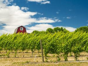 Red Barn at Va Piano Vineyards, Walla Walla, Washington, USA by Richard Duval