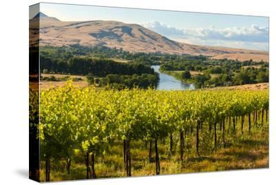 USA, Washington, Red Mountain. Vineyard on with the Yakima River