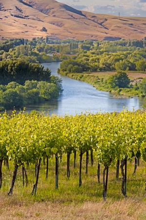 USA, Washington, Red Mountain. Vineyard on with the Yakima River by Richard Duval