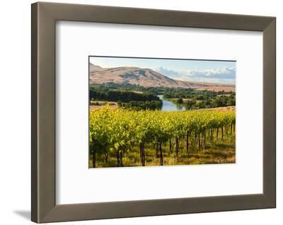 USA, Washington, Red Mountain. Vineyard on with the Yakima River