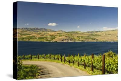 Vineyard in the Lake Chelan AVA, Washington, USA
