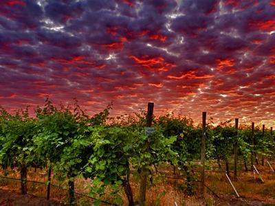 Walla Walla Wine Country, Walla Walla, Washington, USA