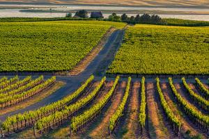 Washington State, Pasco. Sunset on a Vineyard by Richard Duval