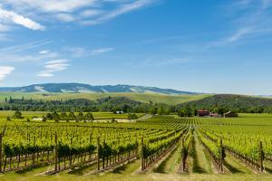 Washington State, Walla Walla. Vineyard in Walla Walla by Richard Duval