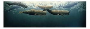 Painting of Six Sperm Whales Swimming Just Below the Ocean's Surface by Richard Ellis