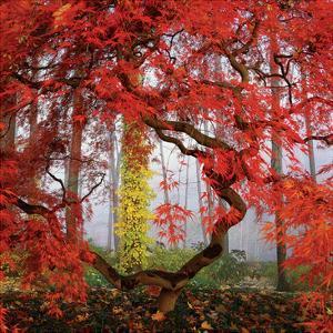 House & Garden - March 2006 by Richard Felber