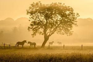 Golden Horses by Richard Guijt