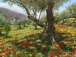 Andalucian Olive Grove by Richard Harpum