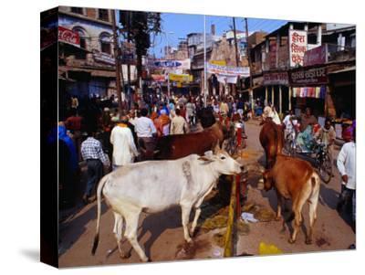 Human and Animal Traffic on Dasaswamedh Ghat Road, Varanasi, Uttar Pradesh, India