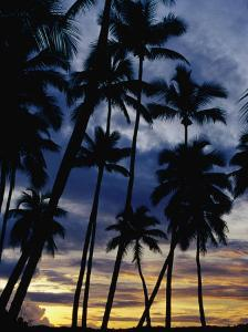 Palm Trees Silhouetted at Sunset, Fiji by Richard I'Anson