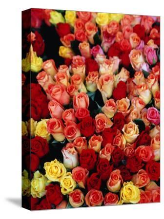 Roses for Sale at a Morning Market on Cours Saleya in the Old Town, Nice, France