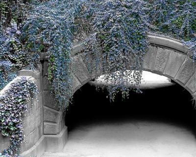 Trefoil Winter by Richard James
