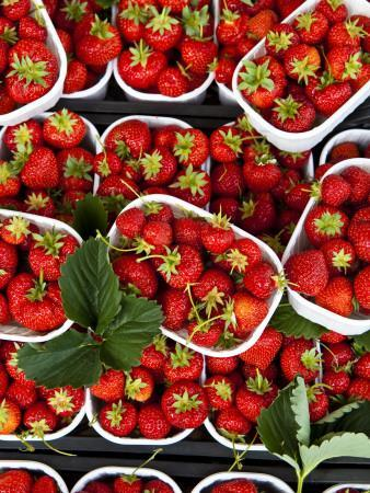 Strawberries for Sale at Market at Campo De' Fiori