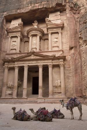 Camels in Front of the Treasury, Petra, Jordan, Middle East