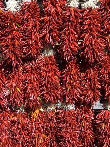 Chillies for Sales, Santa Fe, New Mexico, United States of America, North America by Richard Maschmeyer