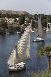 Feluccas Sailing on the River Nile, Aswan, Egypt, North Africa, Africa by Richard Maschmeyer