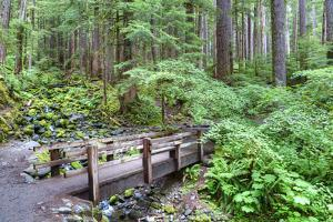 Foot Bridge, Trail to Sol Duc Falls, Rain Forest, Olympic National Park, UNESCO World Heritage Site by Richard Maschmeyer
