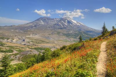 Mount St. Helens with wild flowers, Mount St. Helens National Volcanic Monument, Washington State,