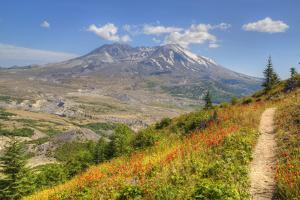 Mount St. Helens with wild flowers, Mount St. Helens National Volcanic Monument, Washington State,  by Richard Maschmeyer