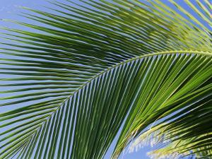 Close-up of Palm Leaf at Ko Samet Island, Rayong, Thailand, Asia by Richard Nebesky