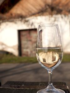 Glass of White Wine (Riesling) at Wine Cellar, Village of Vlkos, Brnensko, Czech Republic, Europe by Richard Nebesky