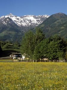 Landscape of Snow Capped Peaks Above Flower Covered Valley, Salzburgland, Austria by Richard Nebesky