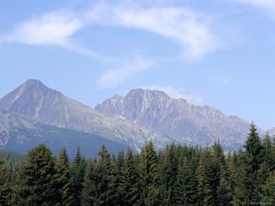 Mountain Pines, Vysoke Tatry Mountains, Vysoke Tatry, Slovakia