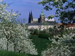 Prague Castle and Cherry Blossoms of Petrin Hill, Prague, Czech Republic by Richard Nebesky