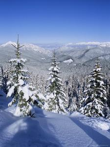 Snow Covered Pines in the Demanovska Valley, Low Tatra Mountains, Slovakia, Europe by Richard Nebesky