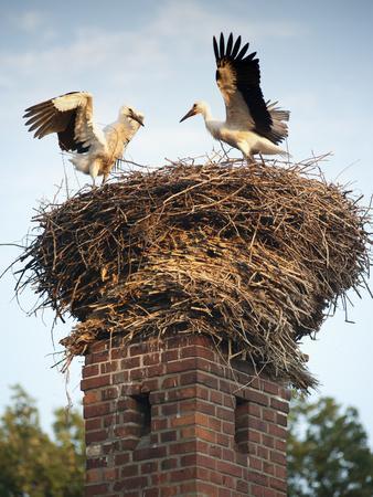 Storks on Top of Chimney in Town of Lenzen, Brandenburg, Germany, Europe