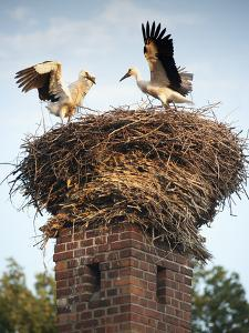 Storks on Top of Chimney in Town of Lenzen, Brandenburg, Germany, Europe by Richard Nebesky