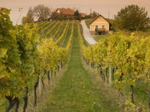Vineyard by Richard Nebesky