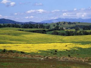 Wide Open Rolling Landscape, High Country, Australia by Richard Nebesky