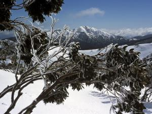 Winter Landscape of Mountains Seen Through Snow-Covered Tree Branches, High Country, Australia by Richard Nebesky