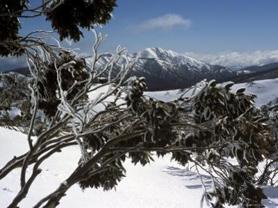 Winter Landscape of Mountains Seen Through Snow-Covered Tree Branches, High Country, Australia