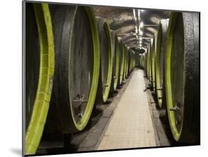 Wooden Wine Barrels, Rosa Coeli Wine Cellar, Dolni Kounice, Brnensko, Czech Republic, Europe by Richard Nebesky