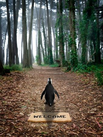 Forest Penguin