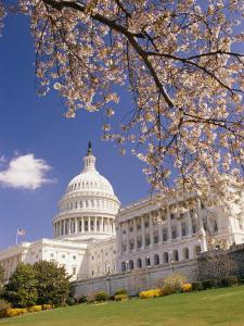 A View of a Cherry Tree in Bloom and the West Face of the Capitol Building by Richard Nowitz