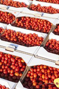 Boxes of Cherry Tomatoes for Sale at Produce Auction by Richard Nowitz