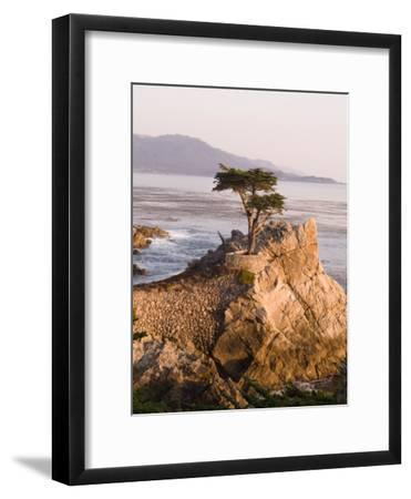 Cypress Tree Along the 17-Mile Drive Outside of Carmel in Monterey County