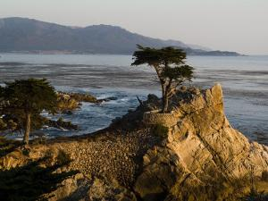 Cypress Tree Along the 17-Mile Drive Outside of Carmel in Monterey County by Richard Nowitz